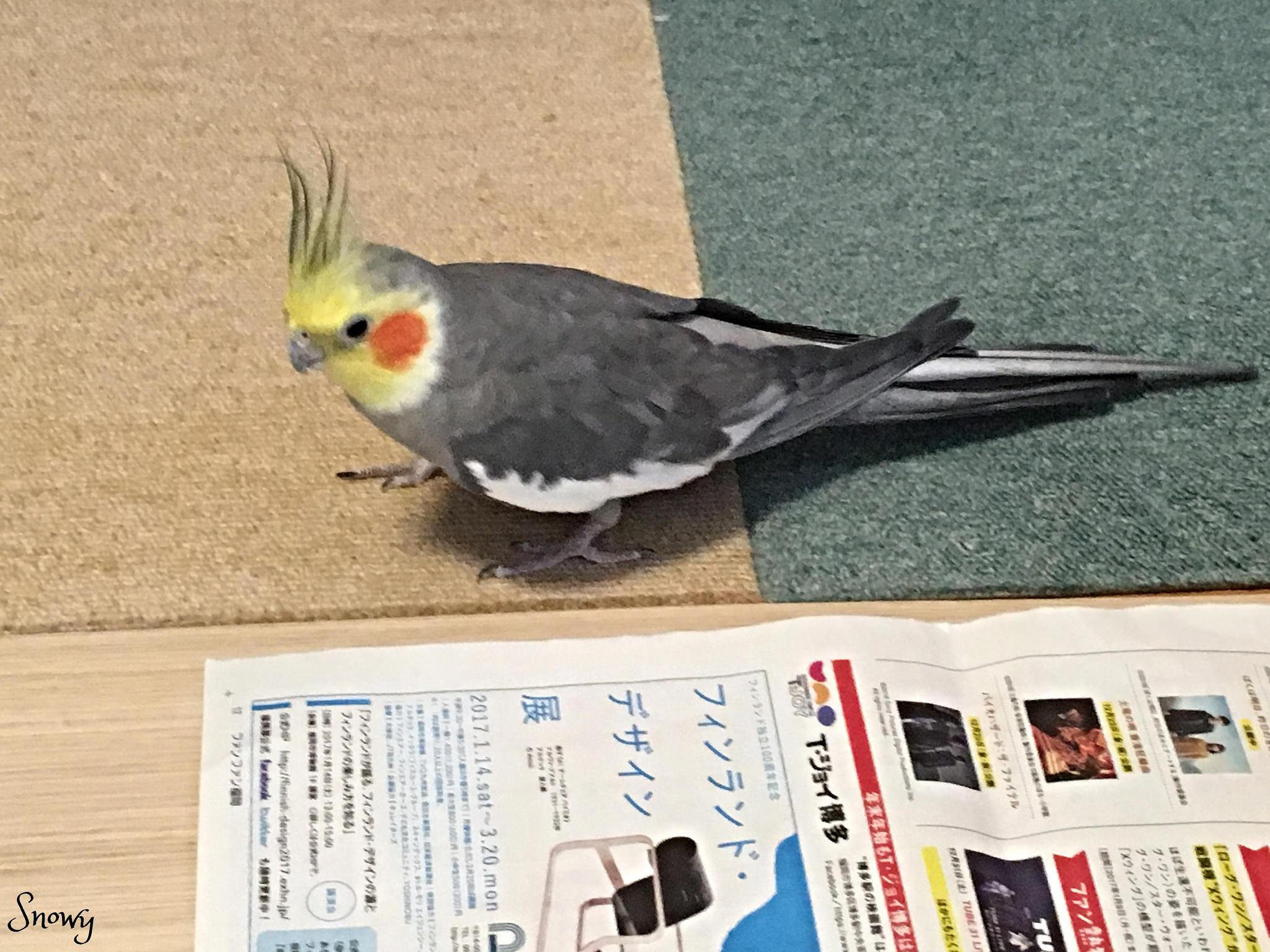初床(2017/01/16)