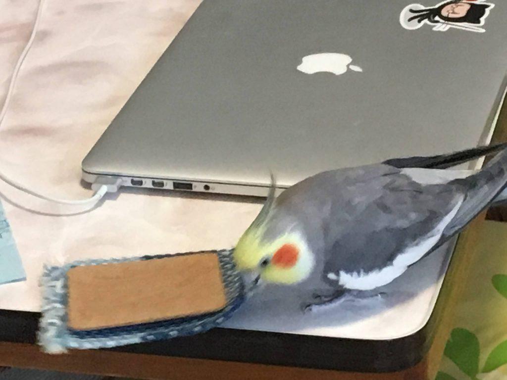 iPadとコースター (8) (2017-05-11)