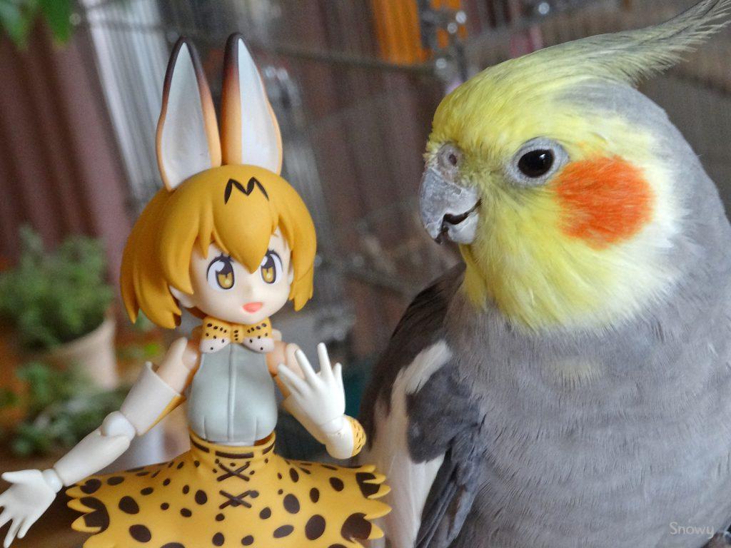 サーバルちゃんを見る(2017-12-28)