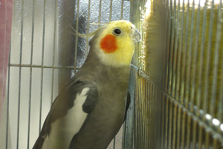 2012-03-15 (2)