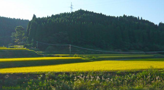 9月の田圃