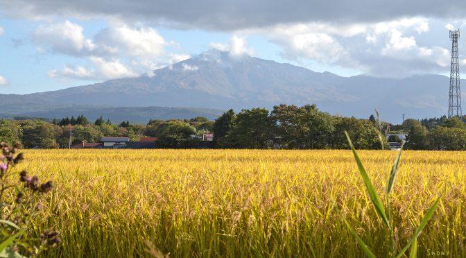 稲穂と鳥海山