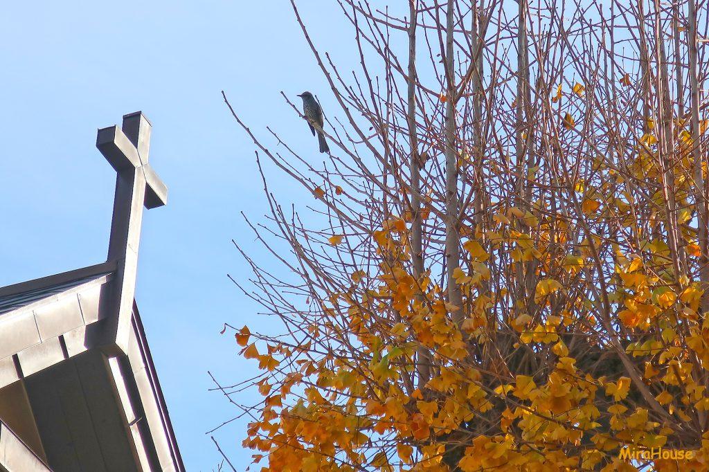 クリスマスの十字架と銀杏ヒヨドリ