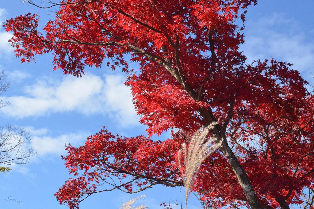 秋の空と紅葉@高尾山
